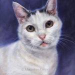 'Binkie'- kattenportret, 24x18, olieverf (verkocht/opdracht)