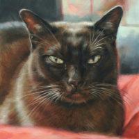 'Burmees', kattenportret, 18x24 cm, olieverf (verkocht/opdracht)