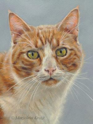 Kattenkunst portret opdracht door Marjolein Kruijt