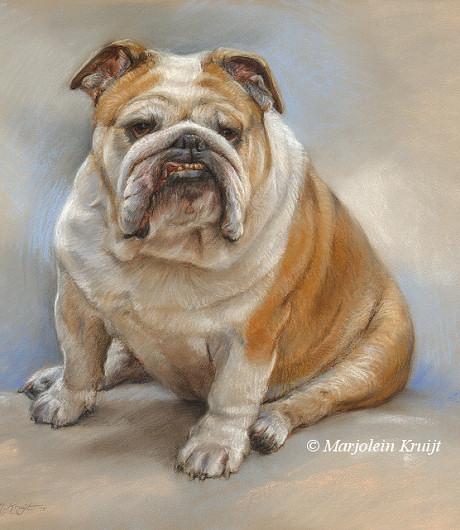 Portret schilderij engelse buldog portret pastel door Marjolein Kruijt