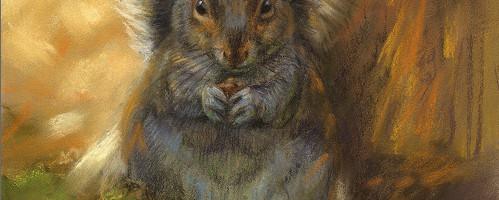 'Eekhoorn', 22x29 cm, pastel, €750 incl. lijst
