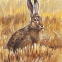 'Haas', 18x24 cm, olieverf schilderij, €900 incl. lijst