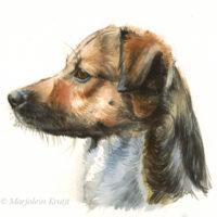 'En profil', hondenportret, 20x17 cm, aquarel, incl. lijst 33x27 cm €400