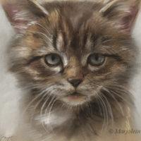 'Kitten', 22x17 cm, portret in pastel, incl. lijst 36x30 cm