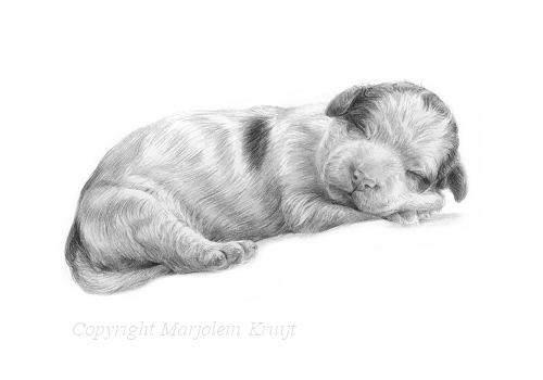 lagotto romagnolo puppy portret tekening Marjolein Kruijt