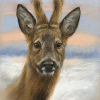 'Reebok', 28x39 cm, pastel schilderij, €850 incl. lijst (46x56cm)
