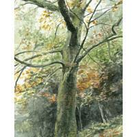 'Boom', 27x15 cm, aquarel, (te koop)