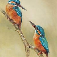 'Ijsvogels', 20x26 cm, olieverf schilderij (verkocht)