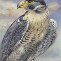 'Slechtvalk', 15x20 cm, olieverf schilderij, €850 incl. lijst