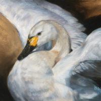 'Wilde kleine zwaan' (Cygnus bewickii), 60x40 cm, olieverf, €2800 incl. lijst