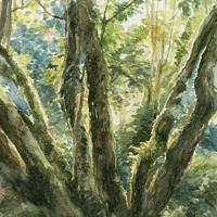 'Tegenlicht', 19x13 cm, aquarel (verkocht)
