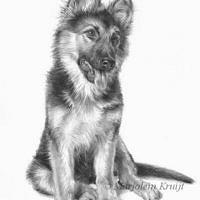 'Bayla' -Duitse herder pup, 24x30 cm, potlood (verkocht/opdracht)