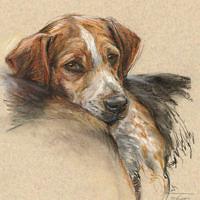 'Beagle' portret, 30x40 cm, pastel, incl. lijst 43x53 cm €750