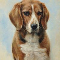 'Beagle'-Noa, 30x40 cm, olieverf schilderij (verkocht/opdracht)