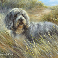 'Bearded collie', 60x50 cm, olieverf schilderij (verkocht/opdracht)