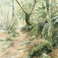 'Becky forest'-pad, 15x23 cm, aquarel, (te koop)