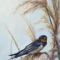 'Boerenzwaluw', 20x30 cm, olieverf schilderij (verkocht)