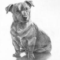 'Boets'-Jack Russel, 30x40 cm, potlood (verkocht/opdracht)