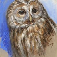 'Bosuil', 20x27 cm, pastel, €550 incl. lijst