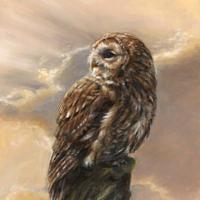 'Evening glory'- Bosuil, 30x40 cm, olieverf schilderij (verkocht)