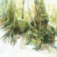 'Old trees', 35x30 cm, aquarel, (te koop)