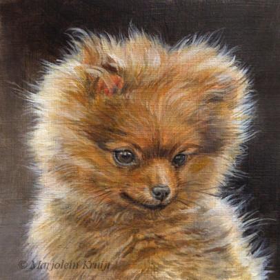 'Dwergkeeshondje pup', 13x13 cm, acryl, €480 incl. lijst