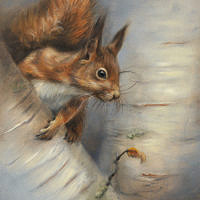 'Eekhoorn ', 18x24 cm, olieverf schilderij (verkocht)