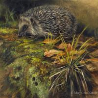 'Egel', 20x20 cm, olieverf schilderij (verkocht)