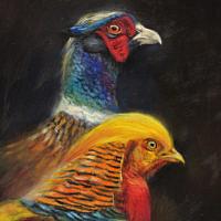 'Fazant en Goudfazant', 15x20 cm, olieverf schilderij, €850 incl. lijst