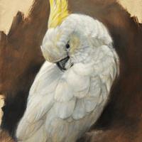 'Geelkuif kakatoe', 24x30 cm, olieverf schilderij, €1050 incl. lijst