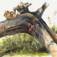 'Goudmantelgrondeekhoorn', 50x35 cm, aquarel, €1400 incl. lijst
