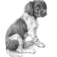 'Heidewachtel pup', 20x30 cm, potlood tekening (verkocht/opdracht)
