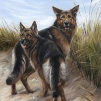 'Herdershonden', 50x60 cm, olieverf schilderij (verkocht/opdracht)