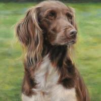 'Heidewachtel'-Lara, 40x50 cm, olieverf schilderij (verkocht/opdracht)