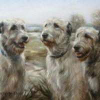 'Ierse wolfshonden' portret, 80x60 cm, olieverf schilderij (verkocht/opdracht)