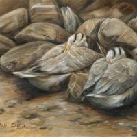 'Hidden' - Indische ganzen, 60x40 cm, olieverf schilderij, €2200 incl. lijst