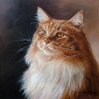 'Maine coon'- Joppe, portret 30x30 cm, olieverf schilderij (verkocht/opdracht)