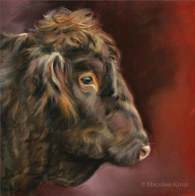 'Schotse Hooglander', 20x20 cm, olieverf schilderij, €950 incl. lijst