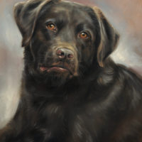 'Labrador' portret, 30x40 cm, olieverf schilderij (verkocht/opdracht)