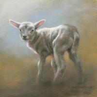 'Lammetje', 25x25 cm, olieverf schilderij (verkocht)