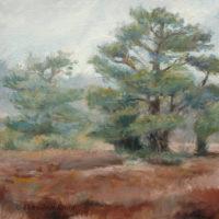 'Lheebroekerzand3'- Drenthe, 30x30 cm, olieverf, (te koop)