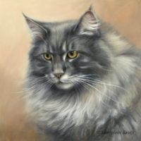 'Maine coon'-Carlos portret, 30x30 cm, olieverf schilderij (verkocht/opdracht)