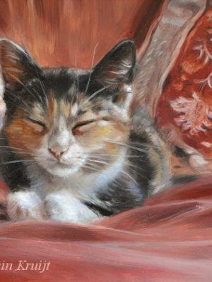 'Misu' -kitten, 18x13 cm, olieverf schilderij (verkocht)