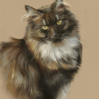 'Noorse boskat' portret, 30x40 cm, pastel (verkocht/opdracht)