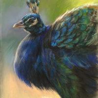'Pauw', 24x34 cm, pastel tekening (verkocht)