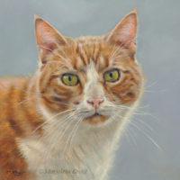 'Pax', kattenportret 20x20 cm, olieverf schilderij (verkocht/opdracht)