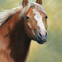 'Pony' portret, 30x40 cm, olieverf schilderij (verkocht/opdracht)
