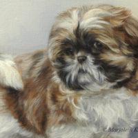 'Shih Tzu puppy', 30x30 cm, olieverf schilderij (verkocht/opdracht)