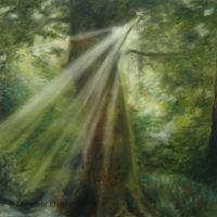 'Ray of light', 60x60 cm, olieverf schilderij (verkocht)
