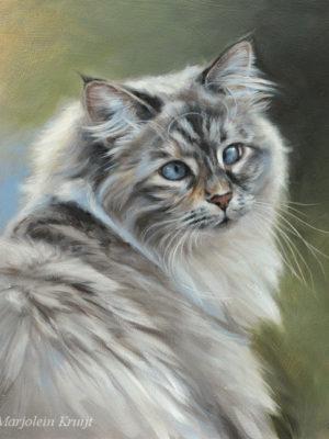 'Schele Luna', siberische poes, 30x30 cm, olieverf schilderij (verkocht/opdracht)